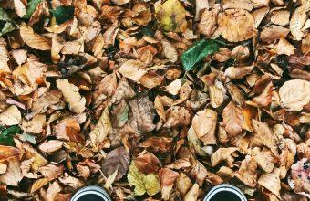 Autumn Feet Foliage Fallen Wallpaper 720x1544 340x220
