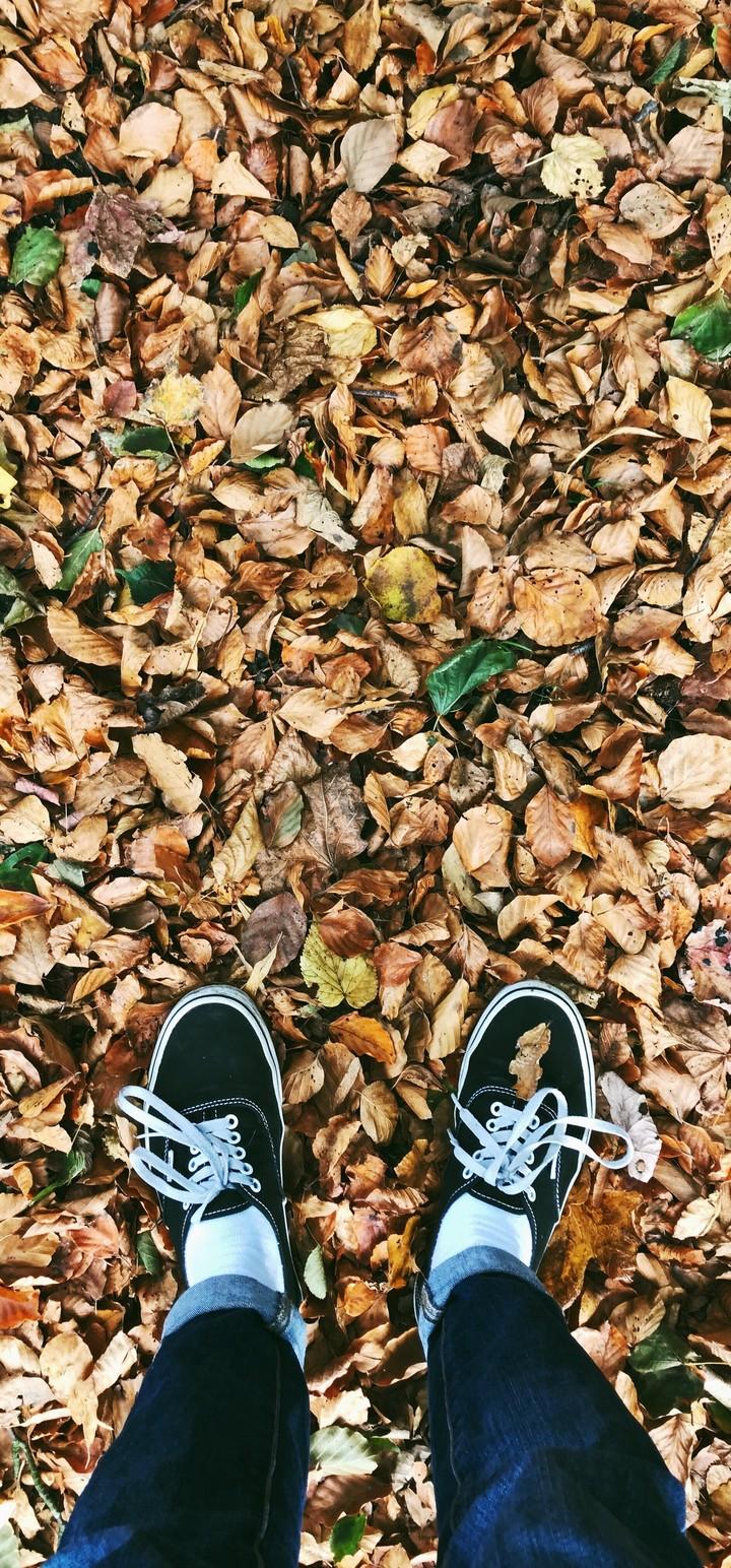 Autumn Feet Foliage Fallen Wallpaper 720x1544