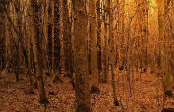 Autumn Forest Trees Wallpaper 720x1544 340x220