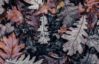 Autumn Leaves Brown Wallpaper 720x1544 340x220