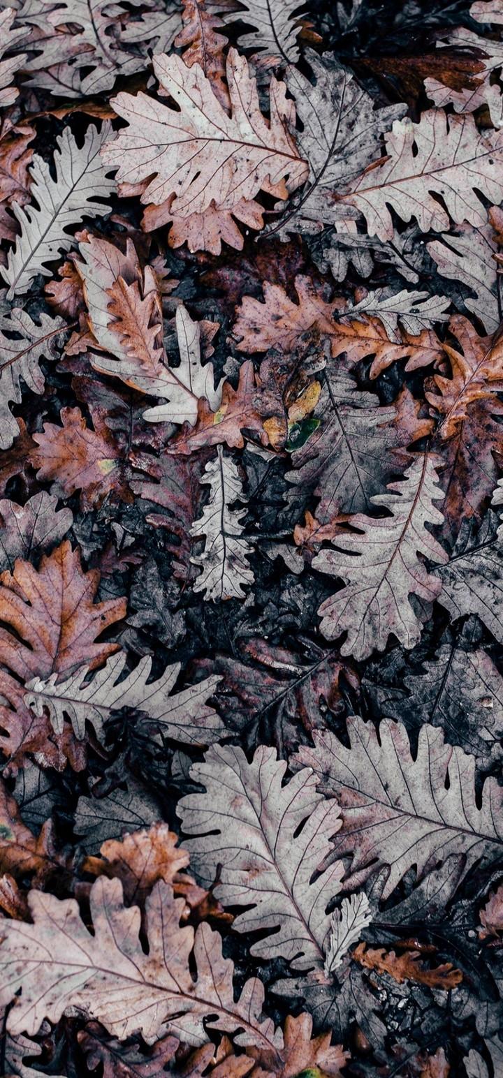 Autumn Leaves Brown Wallpaper 720x1544