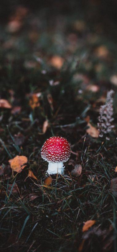 Autumn Mushroom Macro Wallpaper 720x1544 380x815