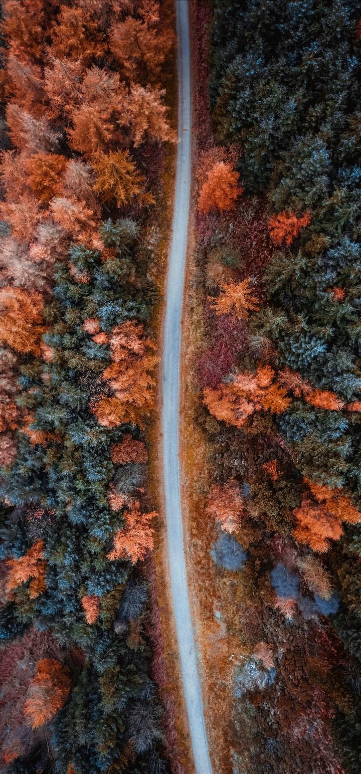 Autumn Road Aerial View Wallpaper 720x1544