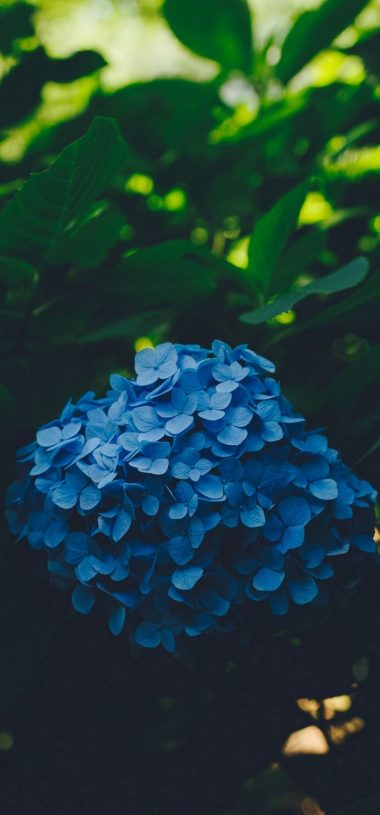 Blue Leaf Flower Wallpaper 720x1544 380x815