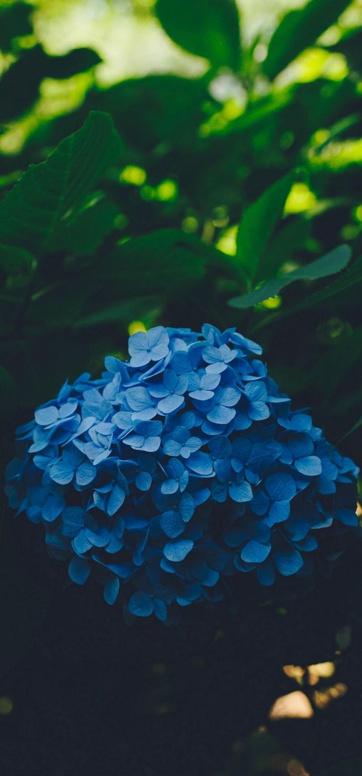 Blue Leaf Flower Wallpaper 720x1544