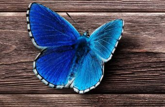 Butterfly Surface Wooden Wallpaper 720x1544 340x220