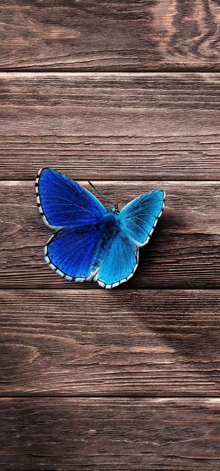 Butterfly Surface Wooden Wallpaper 720x1544