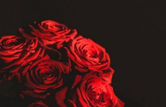 Dark Red Flowers Bouquet Wallpaper 720x1544 340x220