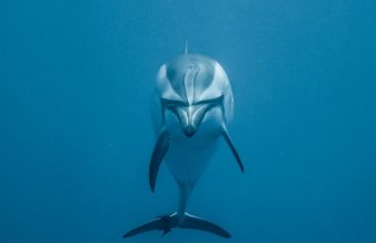 Dolphin Underwater World Swim Wallpaper 720x1544 340x220
