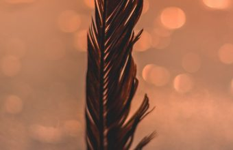 Feather Black Bokeh Wallpaper 720x1544 340x220