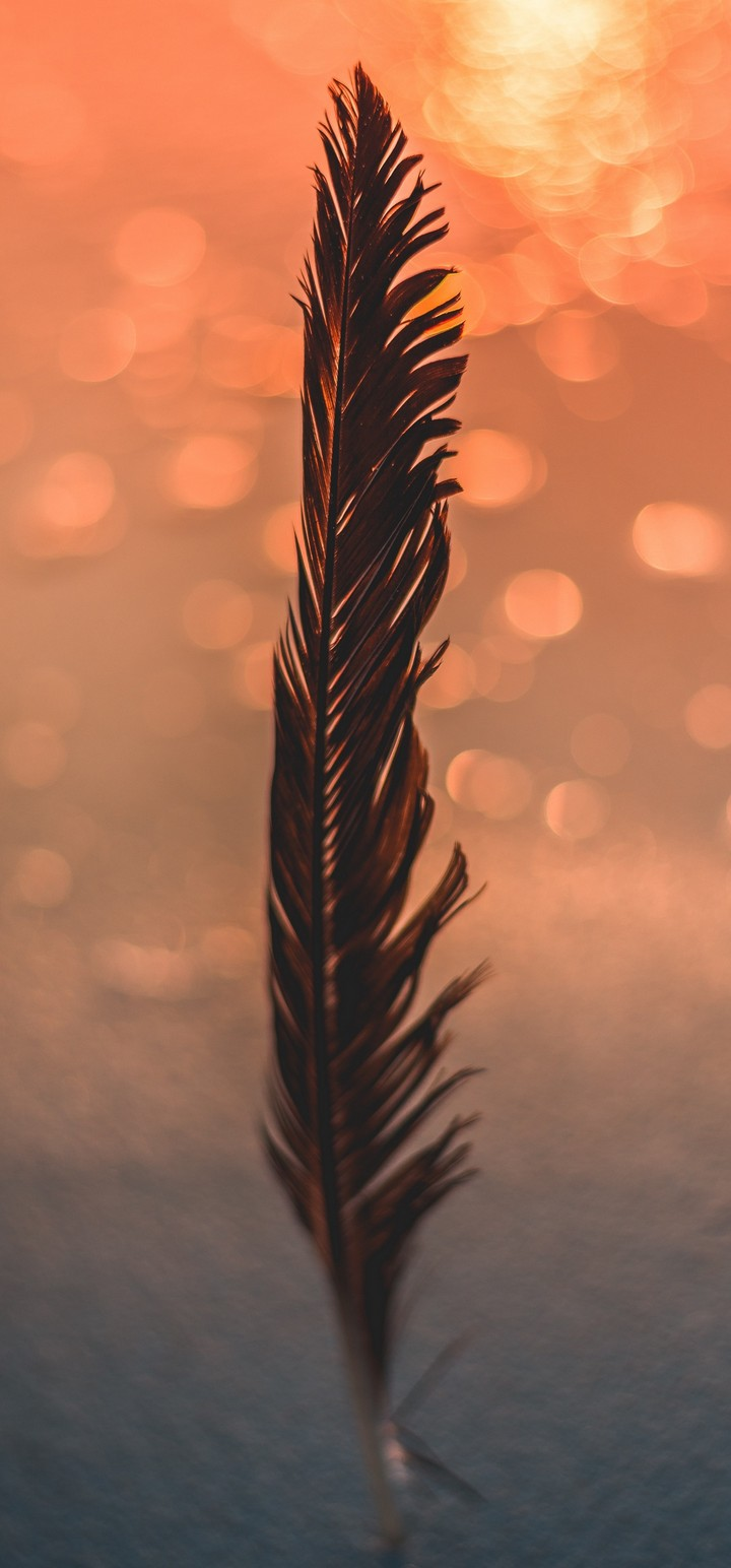 Feather Black Bokeh Wallpaper 720x1544