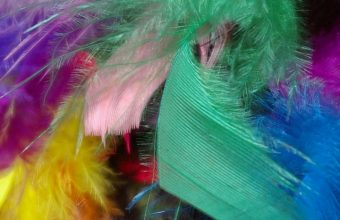 Feathers Background Colorful Wallpaper 720x1544 340x220