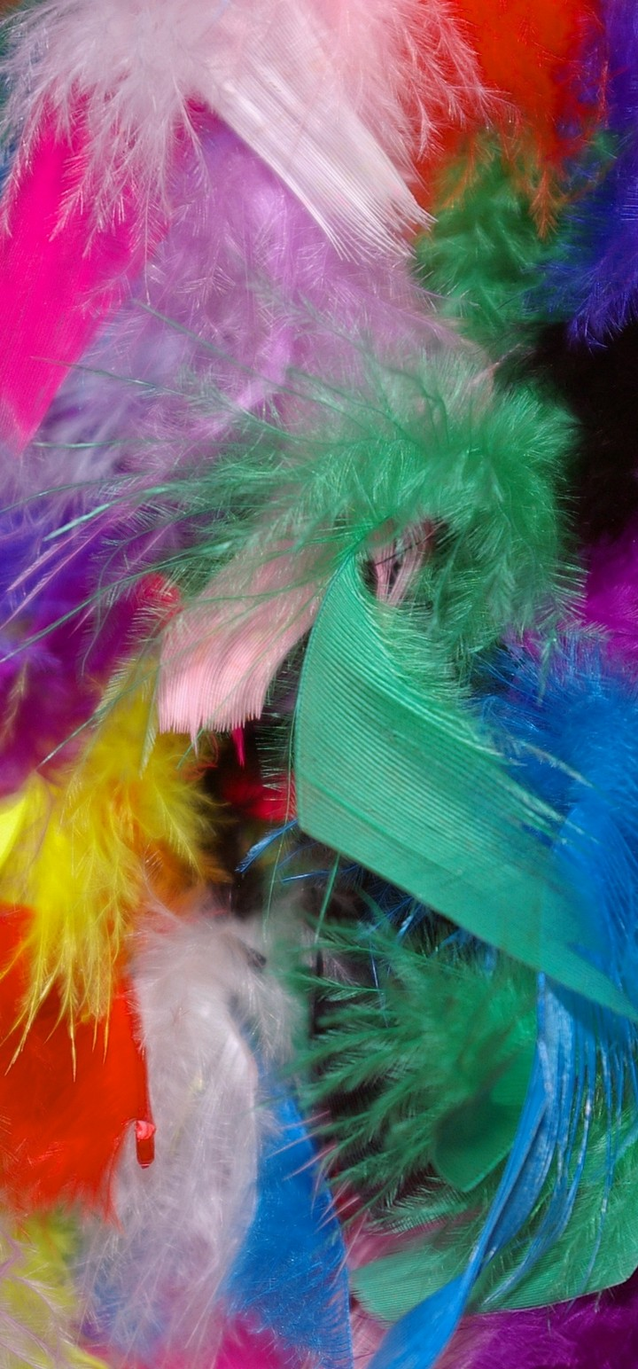 Feathers Background Colorful Wallpaper 720x1544