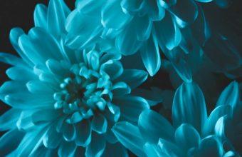 Flowers Blue Petals Wallpaper 720x1544 340x220