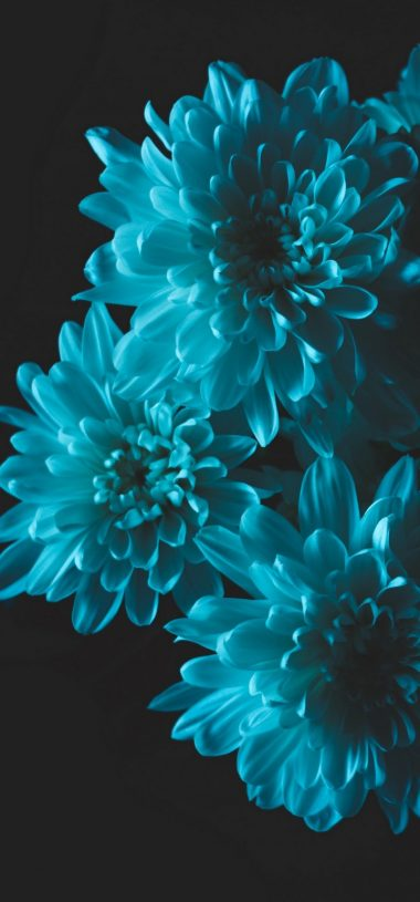 Flowers Blue Petals Wallpaper 720x1544 380x815