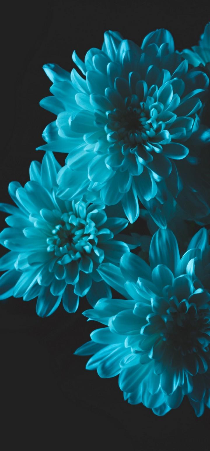 Flowers Blue Petals Wallpaper 720x1544