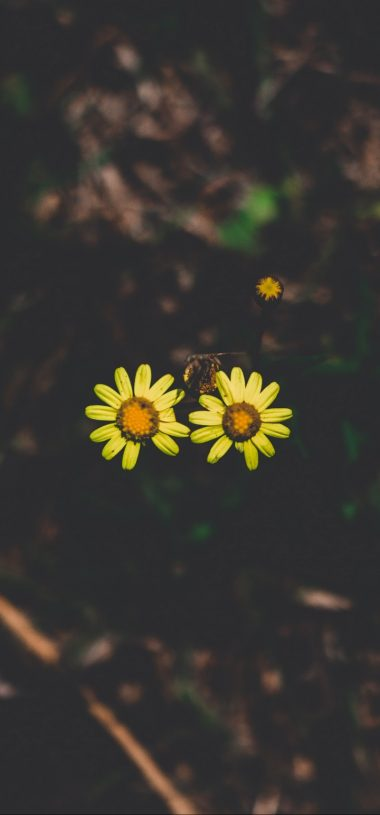 Flowers Couple Stem Dark Background Wallpaper 720x1544 380x815