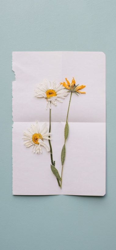 Flowers Herbarium Dry Wallpaper 720x1544 380x815