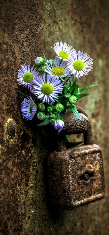 Flowers Lock Rust Wallpaper 720x1544 380x815