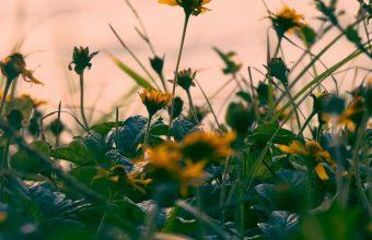 Flowers Yellow Grass Wallpaper 720x1544 340x220