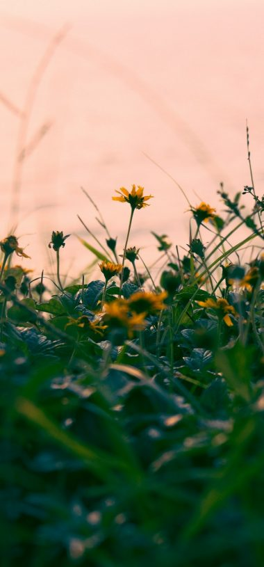 Flowers Yellow Grass Wallpaper 720x1544 380x815