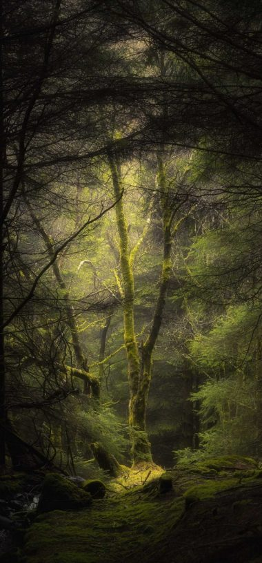 Forest Fog Trees Wallpaper 720x1544 380x815
