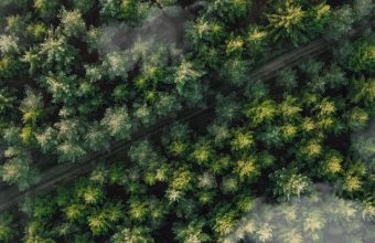Forest Trees Aerial View Wallpaper 720x1544 340x220