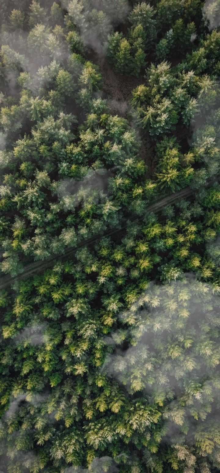 Forest Trees Aerial View Wallpaper 720x1544