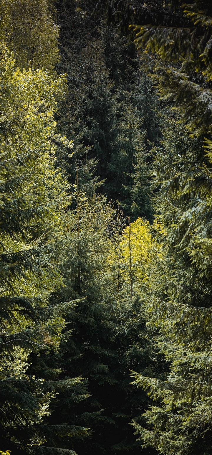 Forest Trees Foliage Wallpaper 720x1544