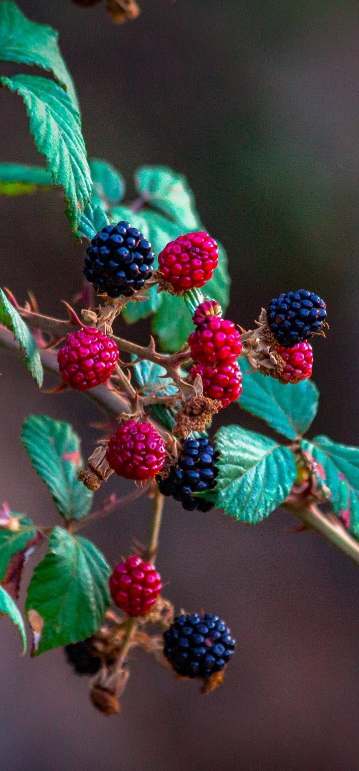 Fruits Raspberry Blackberry Wallpaper 720x1544