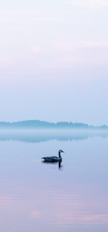Goose Lake Fog Wallpaper 720x1544 380x815