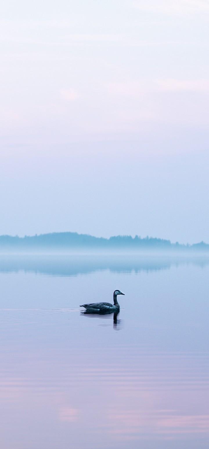 Goose Lake Fog Wallpaper 720x1544