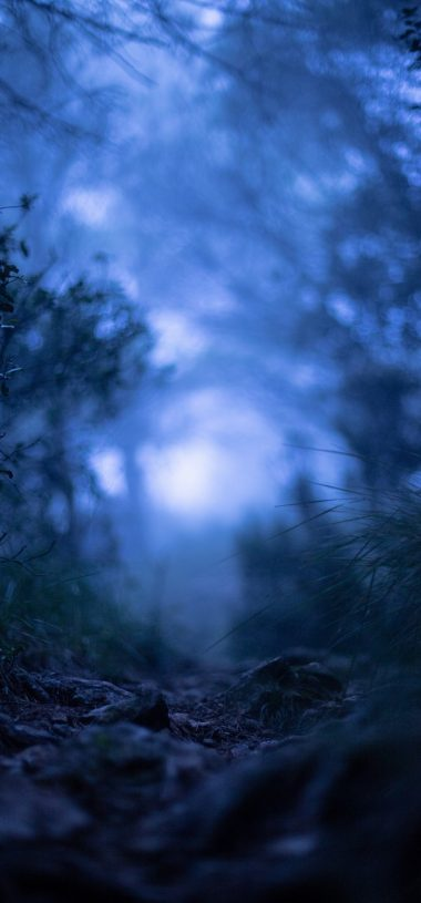 Grass Blur Macro Wallpaper 720x1544 380x815