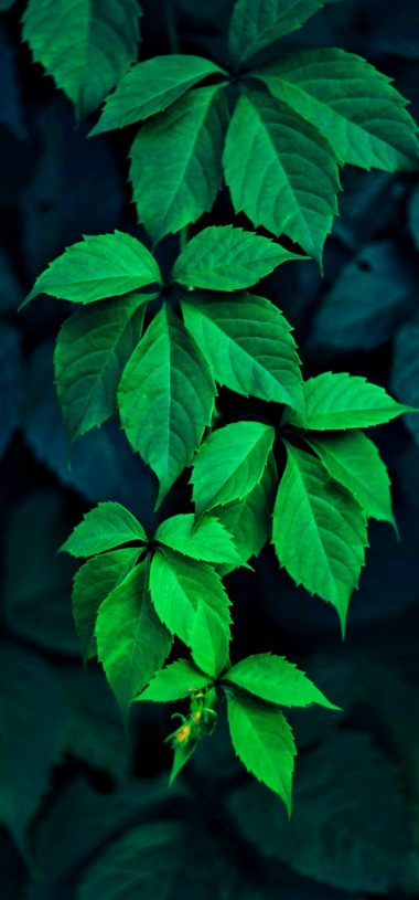 Green Leaves Wallpaper 720x1544 380x815