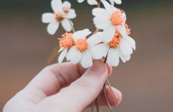 Hand Flowers Field Wallpaper 720x1544 340x220