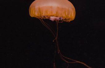 Jellyfish Yellow Underwater World Wallpaper 720x1544 340x220