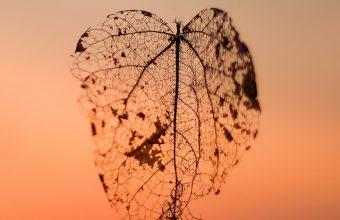 Leaf Autumn Blur Wallpaper 720x1544 340x220