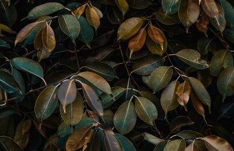 Leaves Bushes Plant Wallpaper 720x1544 340x220