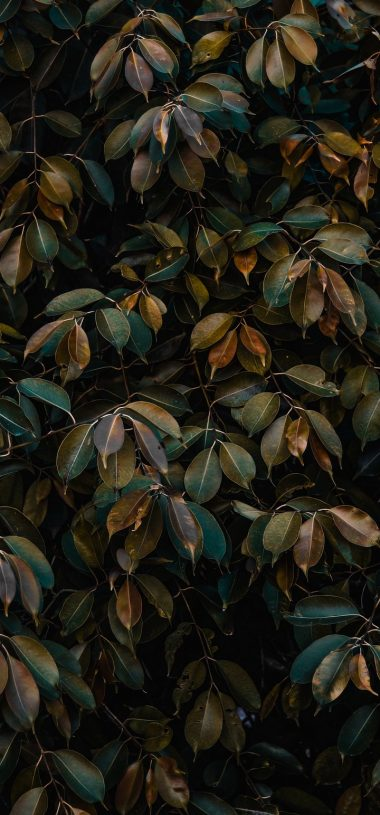 Leaves Bushes Plant Wallpaper 720x1544 380x815