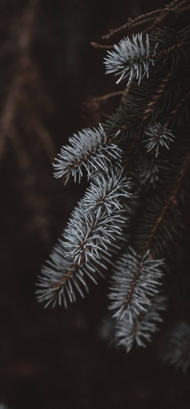 Macro Spruce Branches Wallpaper 720x1544 380x815