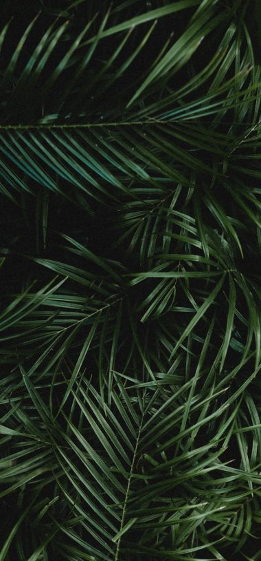 Palm Leaves Branches Wallpaper 720x1544 380x815