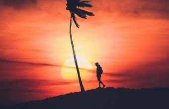Palm Silhouette Sunset Wallpaper 720x1544 340x220