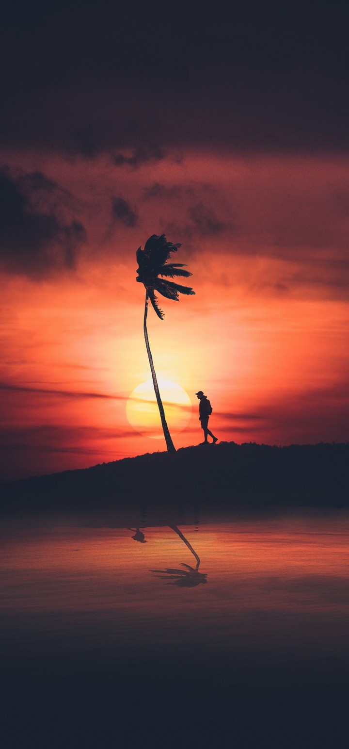 Palm Silhouette Sunset Wallpaper 720x1544