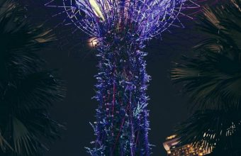 Park Palm Trees Singapore Wallpaper 720x1544 340x220