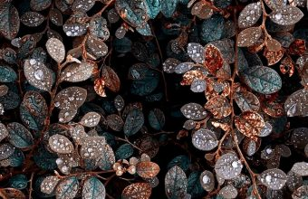 Plant Bush Leaves Wallpaper 720x1544 340x220