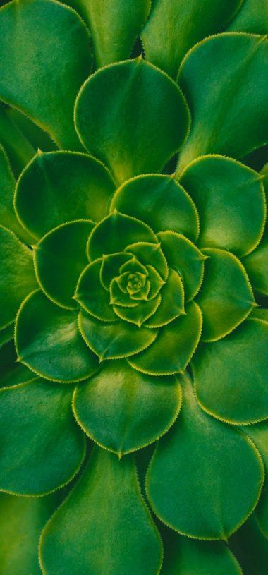 Plant Succulent Green Wallpaper 720x1544 380x815