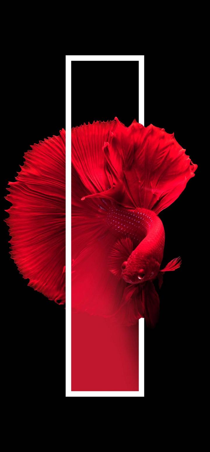 Red Fish Black Background Minimal Wallpaper 720x1544