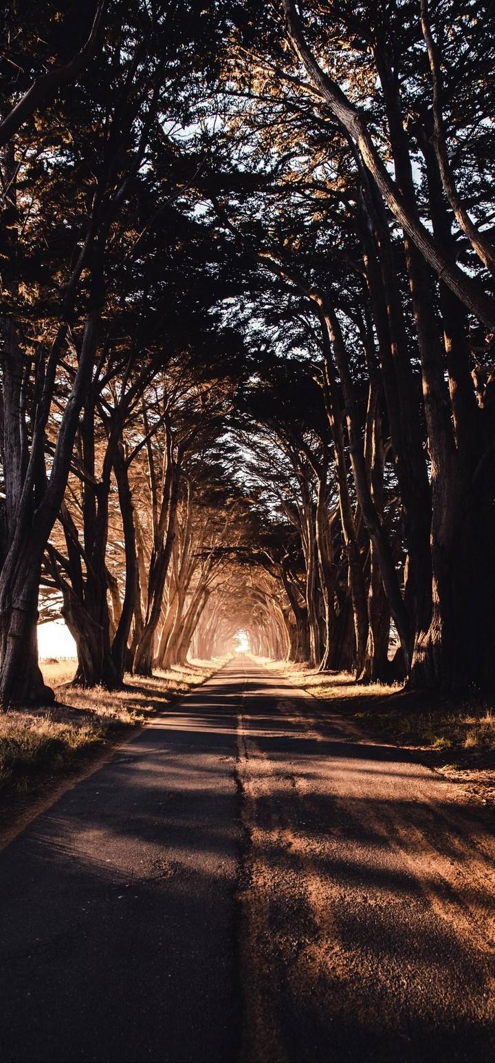 Road Trees Shadow Wallpaper 720x1544
