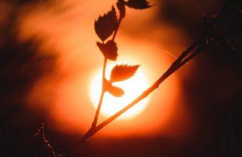 Sun Branch Dark Wallpaper 720x1544 340x220