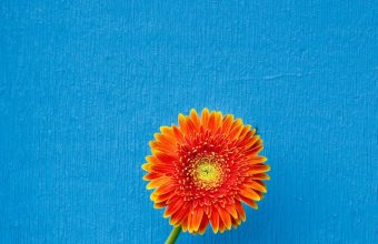 Texture Back Orange Flower Wallpaper 720x1544 340x220